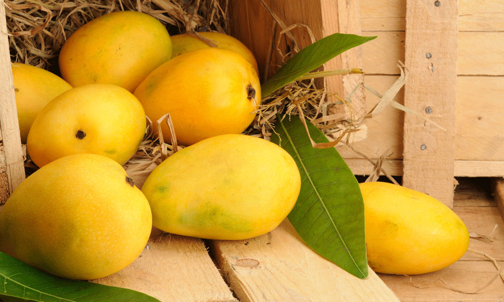 mangoes-in-box