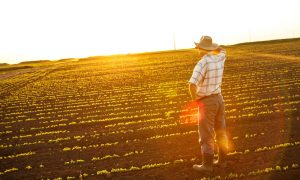 farmer-sunset