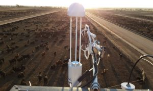 measuring-feedlot-sectors