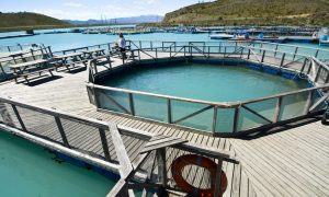 fish farm tasmania stock image
