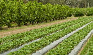 horticulture leading agriculture feb 19