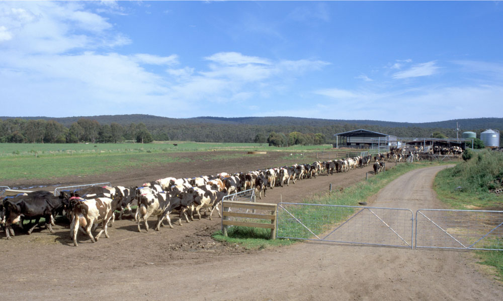 victorian dairy farm stock image