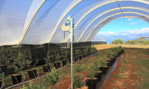 TY Node in Costa Polytunnel 1