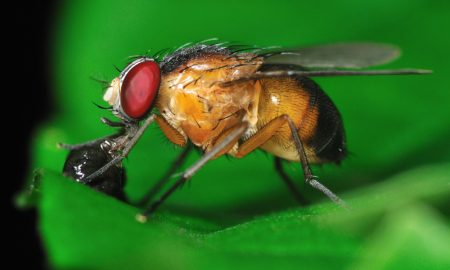 Fruit Fly System Research Program