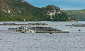 Mid West Aquaculture Development Zone