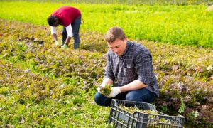 labour shortages in the horticulture sector