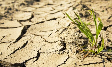 drought plant cracks stock image