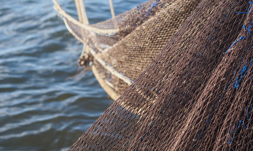 scallop industry